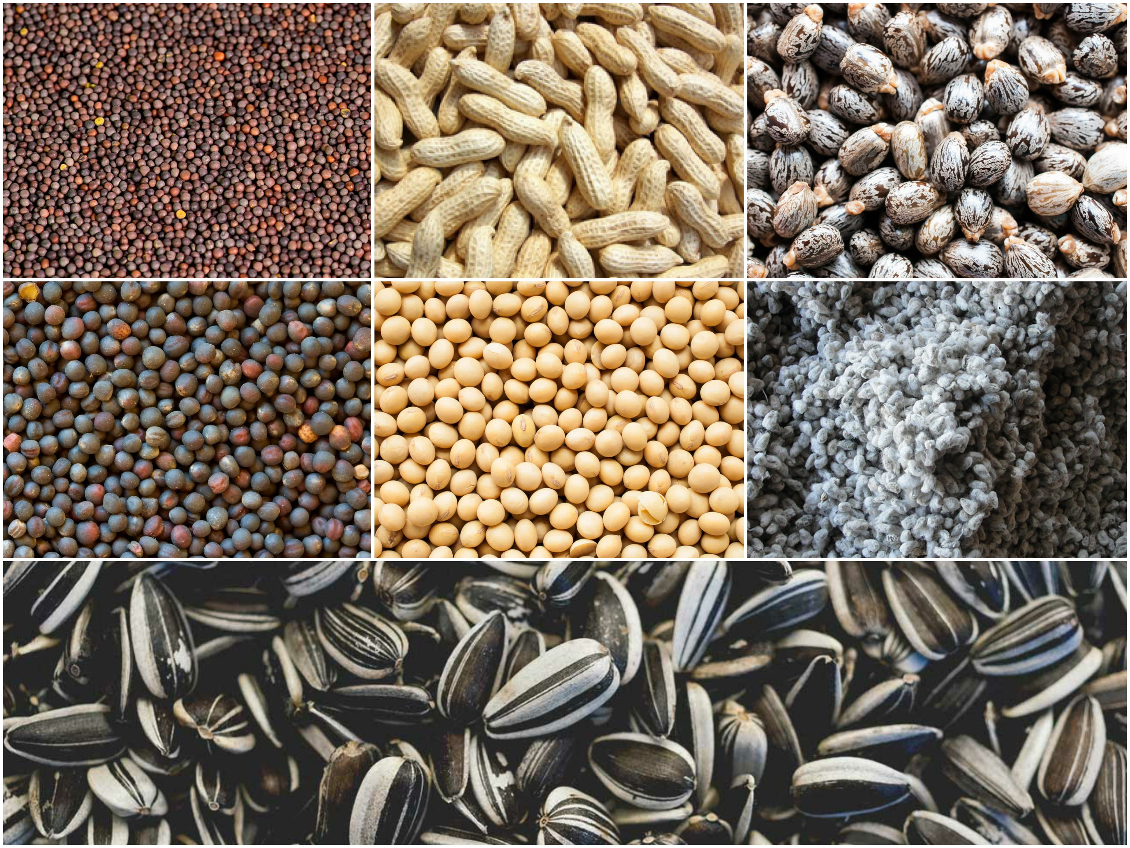Rapeseed, Groundnut, Castor seed, Mustered Seed, Soyabean, Cotton seed, Sunflower seed